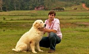 O pastor-maremano-abruzês é ativo durante o dia e a noite, é amigo e protetor (Márcio de Campos/TG)