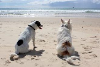 cani spiaggia pet friendly