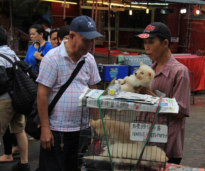 Puppies for sale in Kuala Lumpur's Chinatown