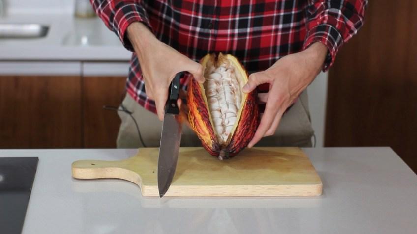 cacao pod ecuador