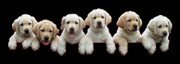 transparent background puppies