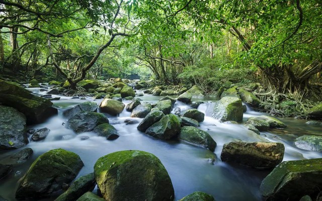 Tai Shing Stream at Tai Mo Shan 大城石澗