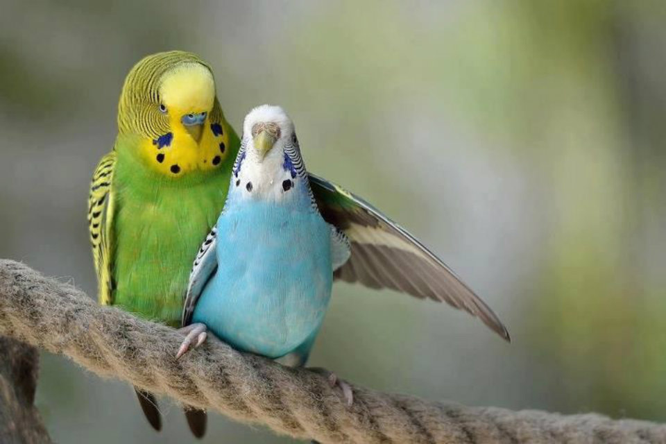Outstanding Love Bird Wallpaper Te Love Birds Hd Wallpapers Lovely Birds 145386 Hd Wallpaper Backgrounds Download