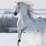 White Horses In Snow 1892723 Hd Wallpaper Backgrounds Download
