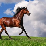 Horse Background Wallpaper For Computer Free Free Horse 1893064 Hd Wallpaper Backgrounds Download