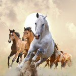 Wallpapers Horses Run Animals Running Hd Pic Of Horse 1893708 Hd Wallpaper Backgrounds Download