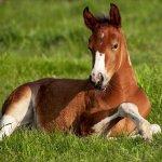 Cute Wallpapers Horses