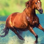 Running Horse In Water Wild Horses 1963929 Hd Wallpaper Backgrounds Download