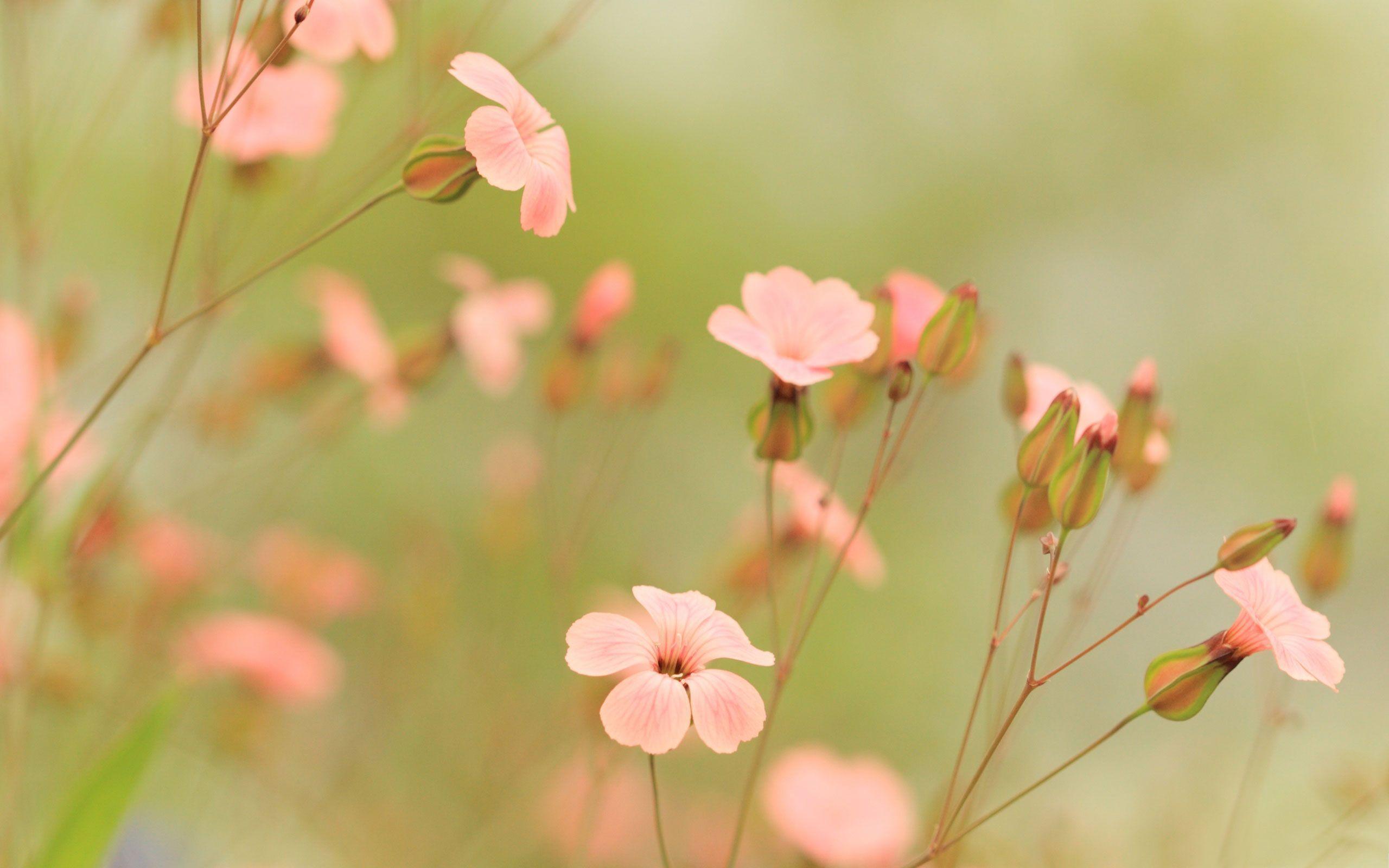 Summer Flowers Wallpapers Summer Flowers Desktop Background 2085038 Hd Wallpaper Backgrounds Download