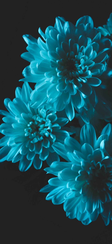 Flower Wallpaper Hd For Phone 101 2440161 Hd Wallpaper Backgrounds Download