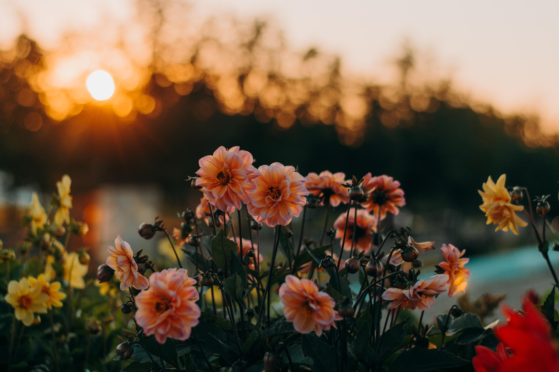 Aesthetic Flower Background Landscape 2561902 Hd Wallpaper Backgrounds Download