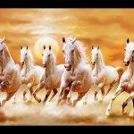 Seven Horses Hd Wallpaper White Seven Horses Painting 282144 Hd Wallpaper Backgrounds Download