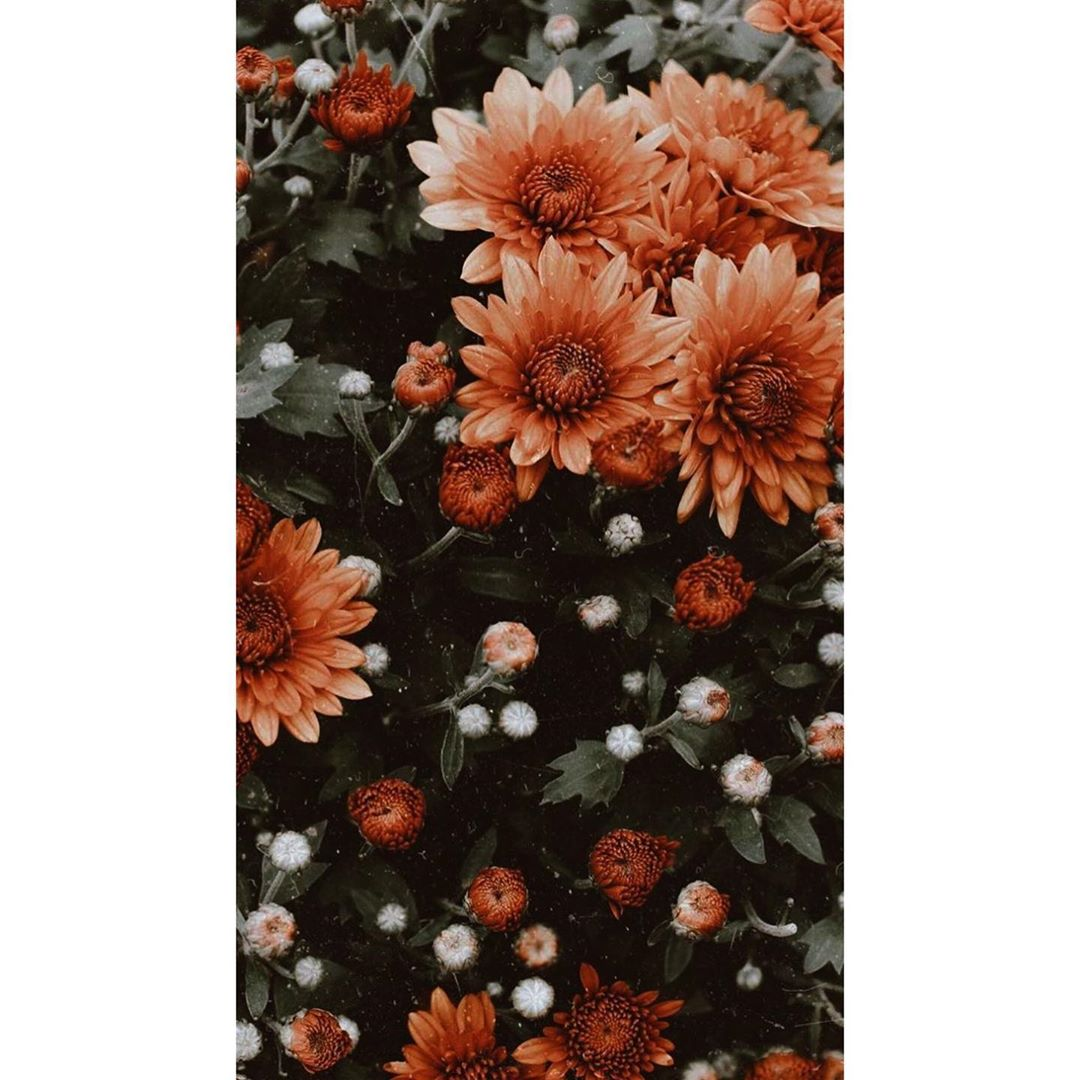 Aesthetic Flowers 2852605 Hd Wallpaper Backgrounds Download