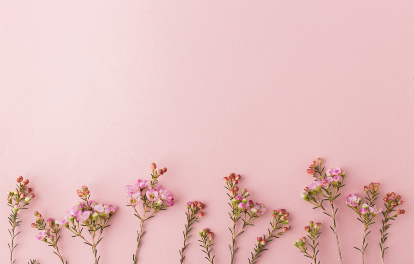 Photo Wallpaper Background Pink Flowers Pink Flowers Desktop Background 2879883 Hd Wallpaper Backgrounds Download