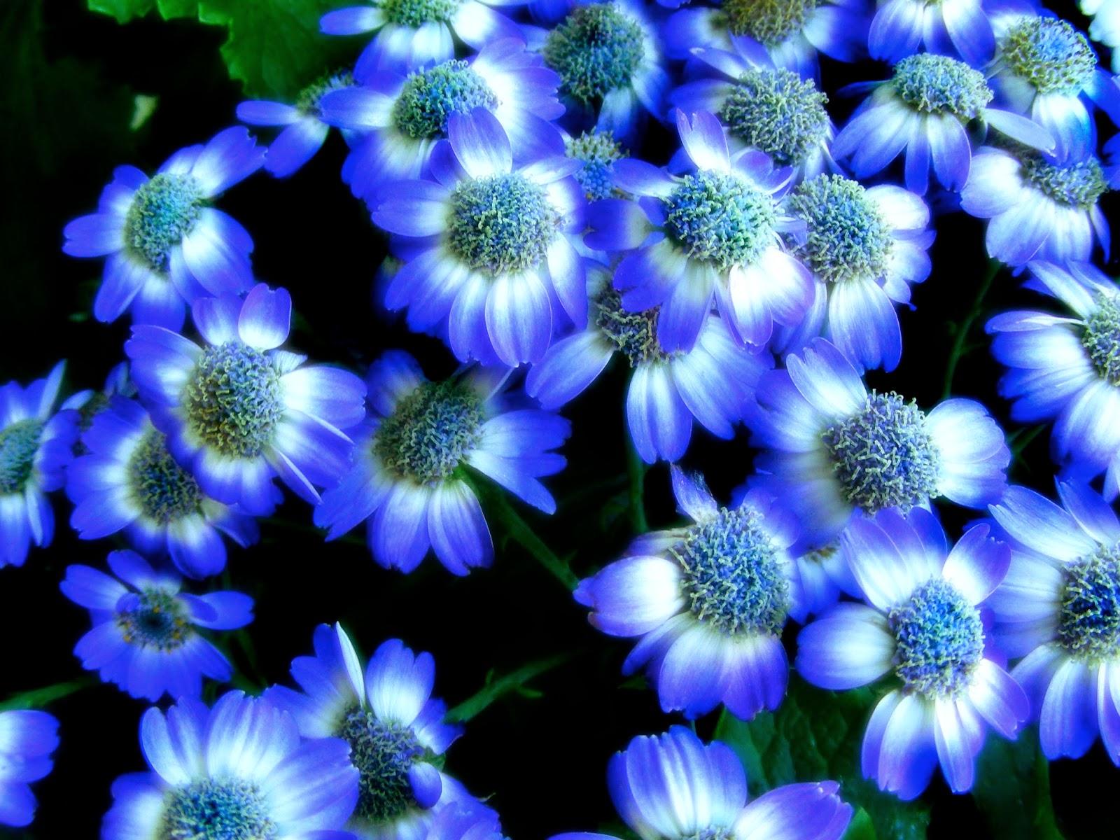 Random Lovely Flowers Wallpaper Desktop Background Full Screen Hd Wallpaper For Flowers 2880551 Hd Wallpaper Backgrounds Download