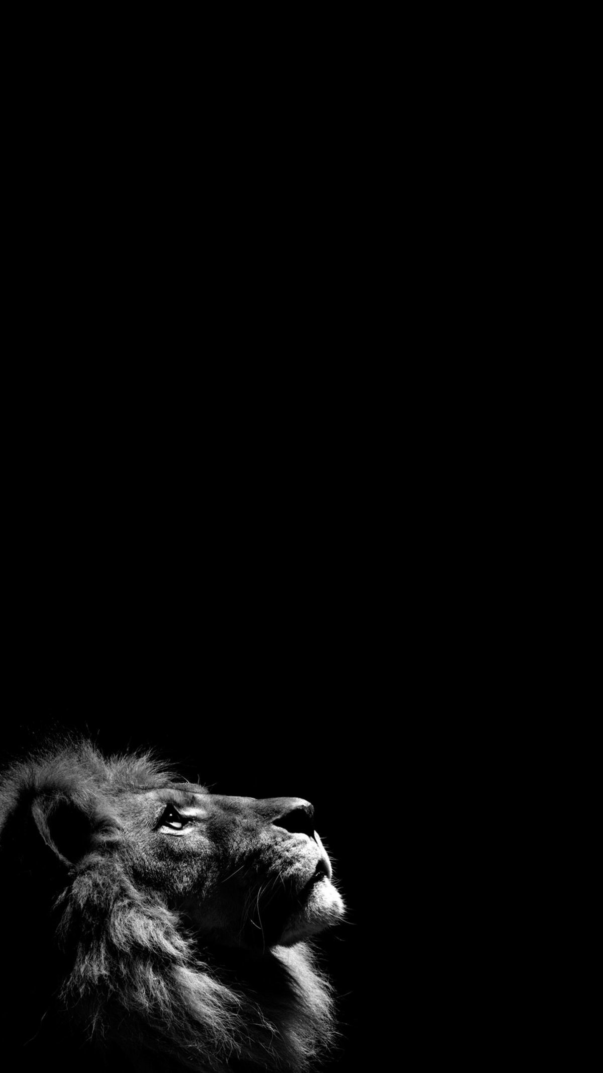 Woman Dog Street Dark Iphone 6 Wallpaper Download Black Wallpaper 4k For Android 73455 Hd Wallpaper Backgrounds Download