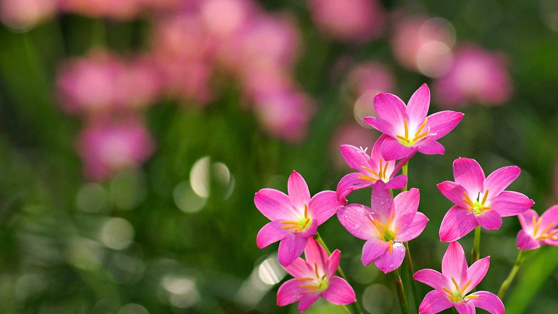 World S Top 100 Beautiful Flowers Images Wallpaper Bisognerebbe Essere Come I Fiori 846887 Hd Wallpaper Backgrounds Download