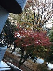 記録的な初雪