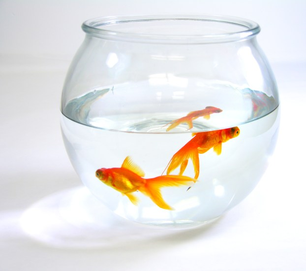 goldfish-zombies-and-how-to-get-out-of-a-rut