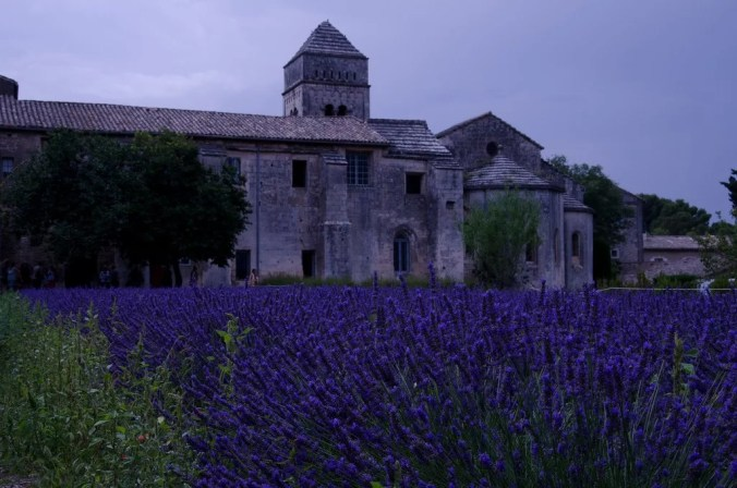 The Lavender fields in Saint Remy