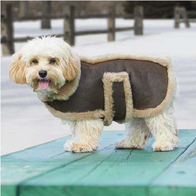 Dog's Leather Shearling Bomber Jacket