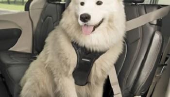 Crash-Test-Approved-Pet-Harness