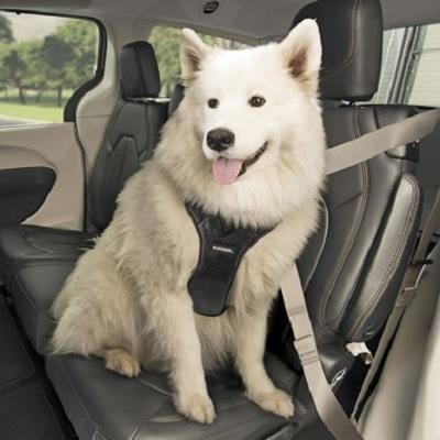 Crash Test Approved Pet Harness