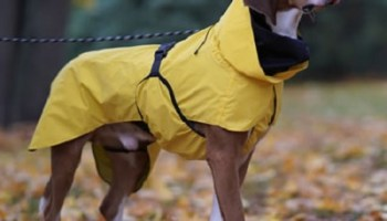 Dog-Reflective-Raincoat
