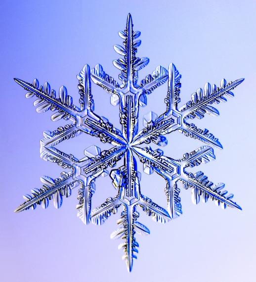 http://www.its.caltech.edu/~atomic/snowcrystals/photos/w031230b033.jpg