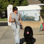 boardandtrain-150x150 Why Obedience is the Best!