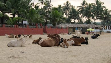 Photo of Goan tourism – Who to blame for the troubled sector?