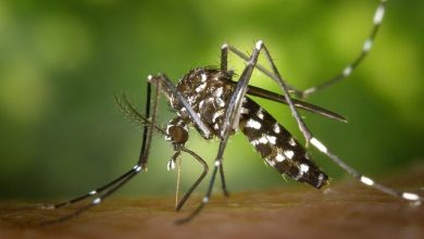 Photo of Could this be the Cause of Dengue in Goa?