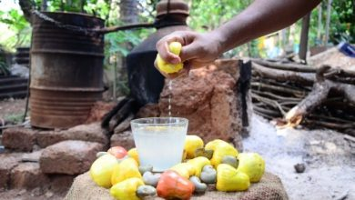 Photo of Feni listed among world's top 10 liqueurs