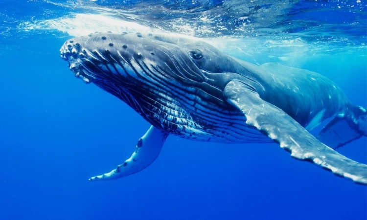 Image Result For Blue Whale Online Challenge