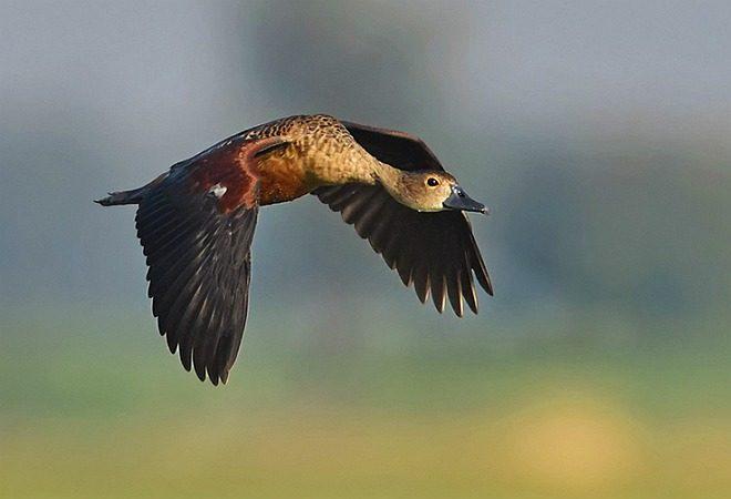 Bird watching at Batim lake