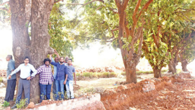 Chipko Movement in Colvale