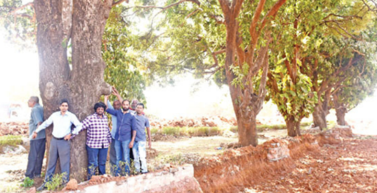 Goa stands strong against the felling of trees on NH66