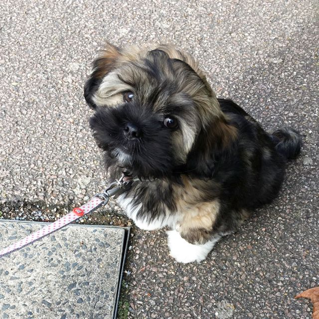 An Introduction To My Puppy - Teddy