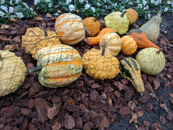 a selection of squashes