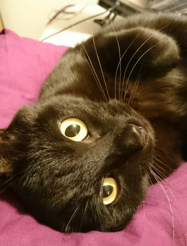 just 10 pictures of black cats to remind you that they're wonderful - www.itsthespicybean.com - #BlackCatDay