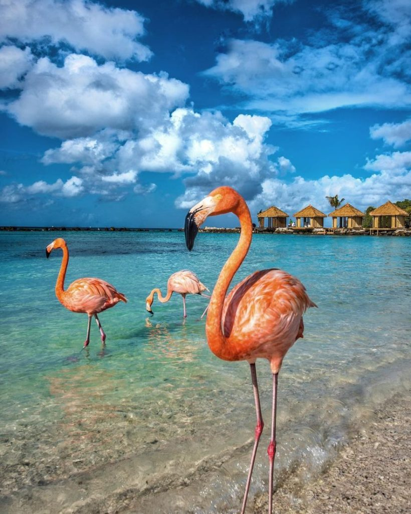 Aruba-travel photography