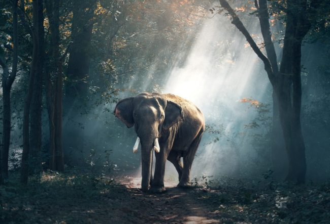 life changing trips in southeast asia elephant
