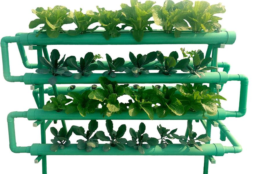 Aquaponics – The New Way of Growing Plants