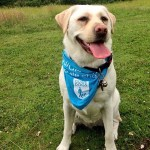 Kika Guide Dog