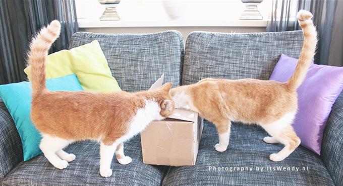 biologisch kattenvoer