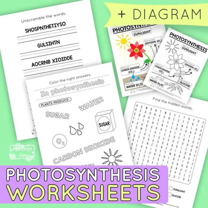 Photosynthesis Worksheets For Kids Itsybitsyfun Com