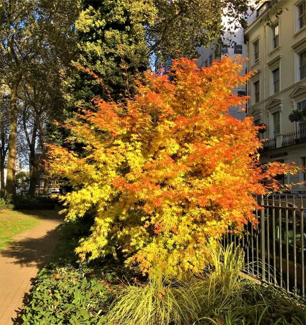 Autumn colours in London