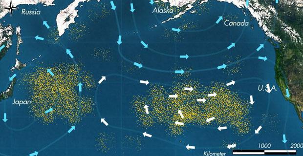 เส้นทางการเดินทางของสายน้ำ จุดสีหลืองแทนขยะพลาสติก จะเห็นถึงจำนวนมหาศาลของมัน ซึ่งขยะพวกนี้จะจับตัวกันไปแพอยู่กลาง Gyres
