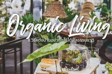 8 วิธีตกแต่งบ้านให้ดูธรรมชาติแบบ Organic Living 25 - เฟอร์นิเจอร์