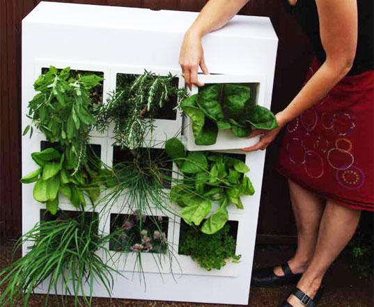 สวนผักแนวตั้งในคอนโด 13 - vertical garden